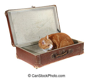 cute tomcat in old brown suitcase