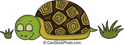 Cute turtle sleeping
