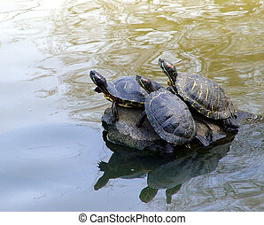 Cute turtles - Three turtles sunbathing on the rock