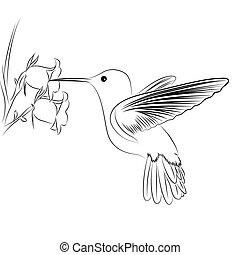 Cute vector humming bird on white background