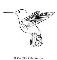 humming bird - Cute vector humming bird on white background