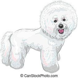 cute, vetorial, raça, cão, frise bichon, branca