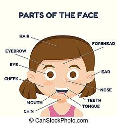 cute, vocabulário, parts., ilustração, rosto, girl., vetorial, caricatura, style.