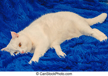 cute white cat with yellow eyes on a blue background