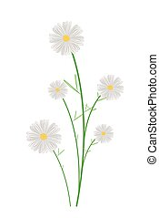 Cute White Cosmos Flowers on White Background