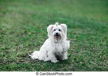 Cute white dog sitting in grass