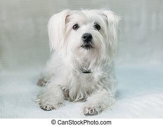 Cute white dog