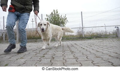 Cute white medium dog running in circle with his...