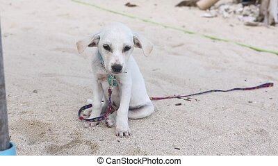 Cute white puppy on the beach