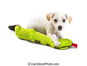 Cute White Puppy With Toy