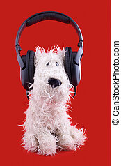 cute white toy dog in headphones on red background