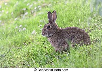 Cute wild rabbit in Bruges park, Belgium
