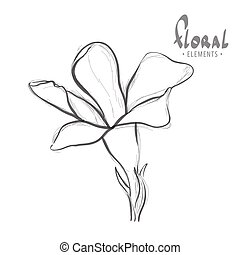 Cute wildflower - Wild flower on a white background looks...