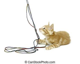 Cute yellow cat with yarn