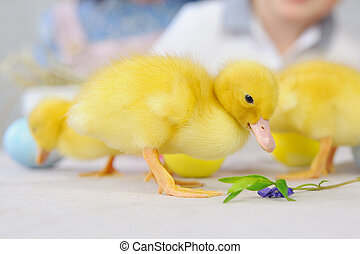 Cute yellow little ducklings on the wooden table in the room