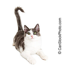 Cute Young Attentive Kitten on White