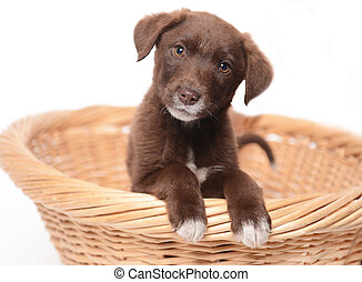 cute young dog on white background