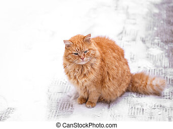 Cute young ginger cat in the snow