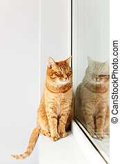 Cute young ginger cat sitting on a windowsill