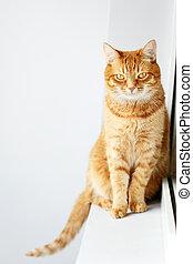 Cute young ginger cat sitting on a windowsill near window