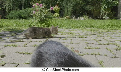 Cute young hungry kittens eating pet food together outside...