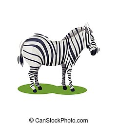 Cute zebra standing on green grass. African wild horse with black-and-white stripes. Wildlife theme. Flat vector icon