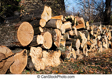 Cuted wood in the line