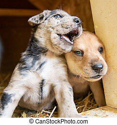 cutest terrier lab husky mix puppies playing in dog house