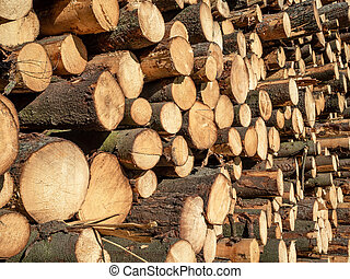 Cuts logs on a sunny day.