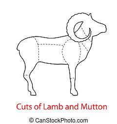 Cuts-of-Lamb-and-Mutton - Cuts of Lamb and Mutton. Pattern ...