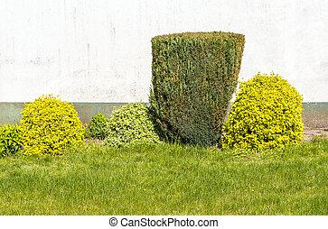 cutted bush in a private garden