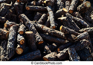 Cutted Wood Trunk Texture