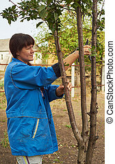 Woman in blue jacket holding cherry tree pruning in the fall.