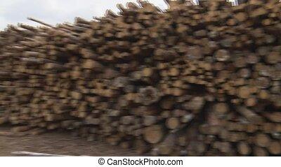 Cutting down trees. Wood storage warehouse. Wood. - Cutting...