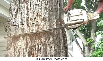 Cutting Into Tree with Chainsaw