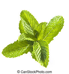 Mint leaves - Cutting of Mint leaves isolated on white