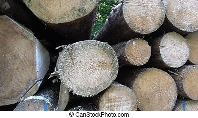 Cutting of the trees, bark beetle calamity, conifer tree logs on pile in woodland, ready for transportation