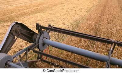 cutting off the wheat