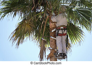 cutting palm tree fronds, high up