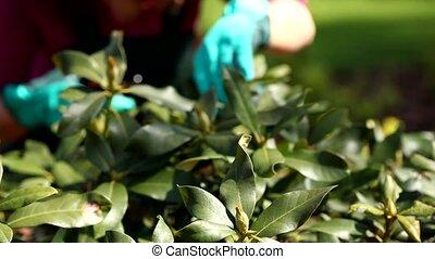 Cutting plants video
