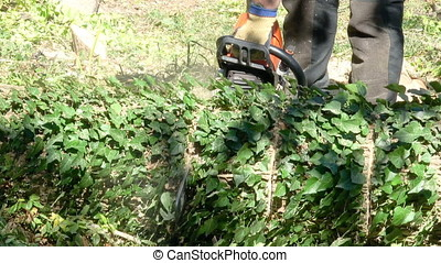 Cutting through a large log with a chain saw - Tree surgeon...