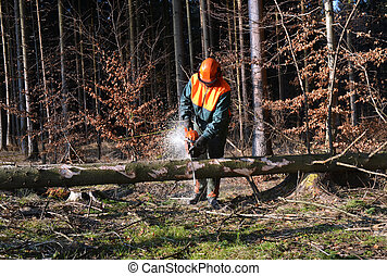 Woodcutter dividing lying tree in pieces in the forest