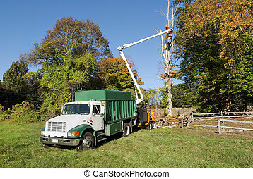 Cutting tree - Worker in bucket truck cutting dead tree