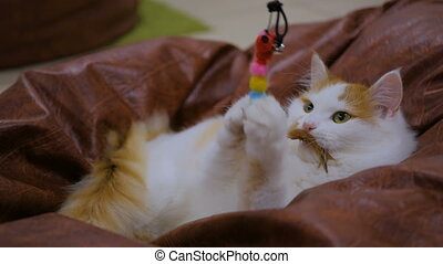 Cuty cat playing with toy