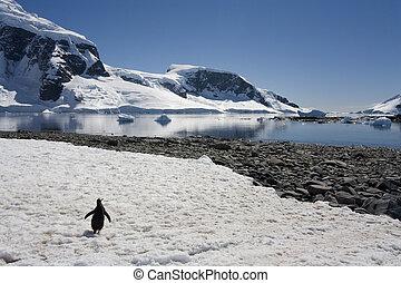 Cuverville Bay - Antarctic Peninsula - Antarctica