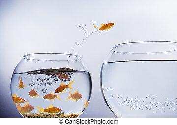 cuvette goldfish, sauter, bondé
