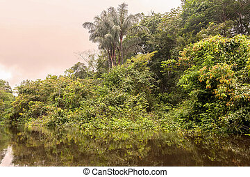 Cuyabeno River, Cuyabeno Wildlife Reserve - The Cuyabeno ...