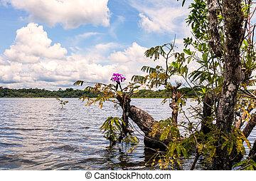 Cuyabeno Wildlife Reserve, Water Trees - Cuyabeno Wildlife ...