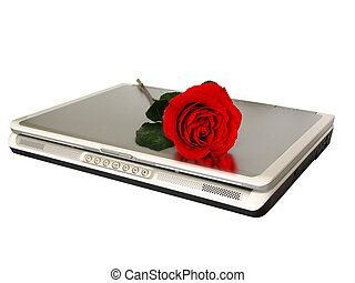Cyber Love - red rose on top of laptop