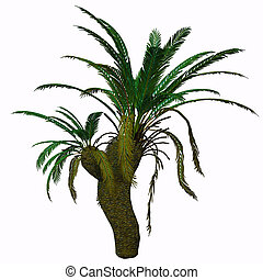 Cycad Seed Plant - Cycads are seed plants with a long fossil...